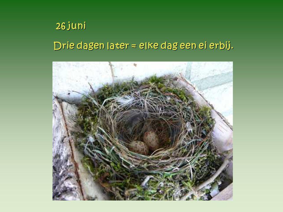 Drie dagen later = elke dag een ei erbij. Drie dagen later = elke dag een ei erbij. 26 juni 26 juni