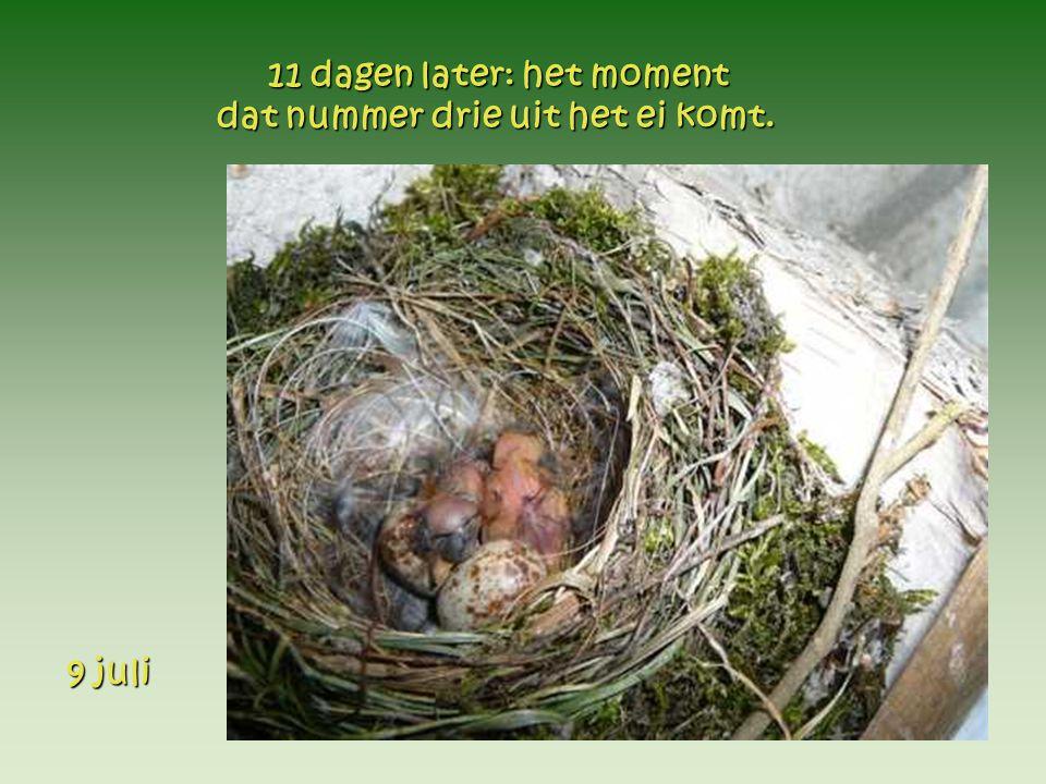 9 juli 9 juli 11 dagen later: het moment 11 dagen later: het moment dat nummer drie uit het ei komt.