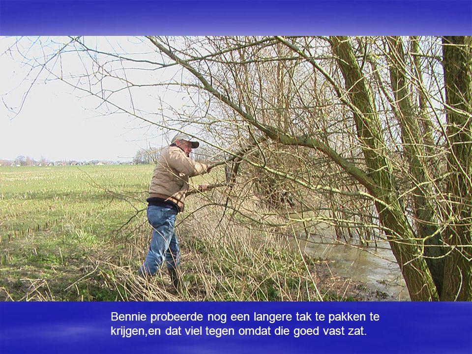 Bennie probeerde nog een langere tak te pakken te krijgen,en dat viel tegen omdat die goed vast zat.