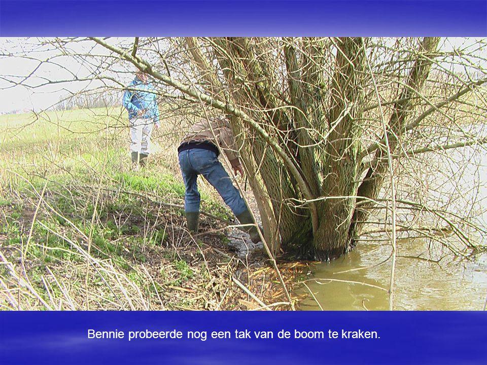 Bennie probeerde nog een tak van de boom te kraken.
