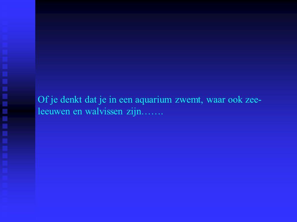 Of je denkt dat je in een aquarium zwemt, waar ook zee- leeuwen en walvissen zijn…….