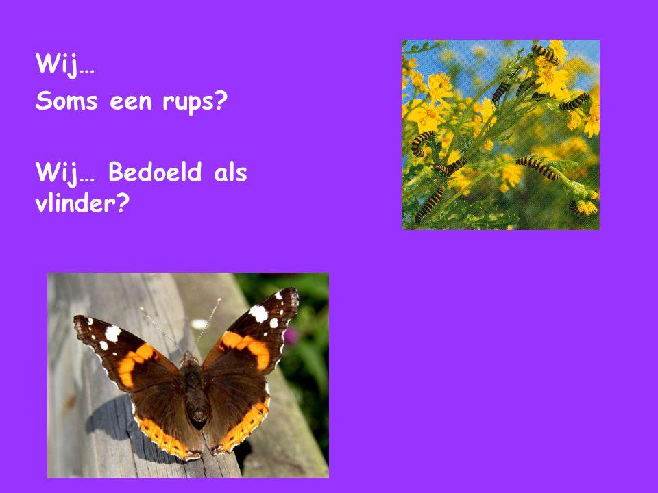 Wij… Soms een rups? Wij… Bedoeld als vlinder?