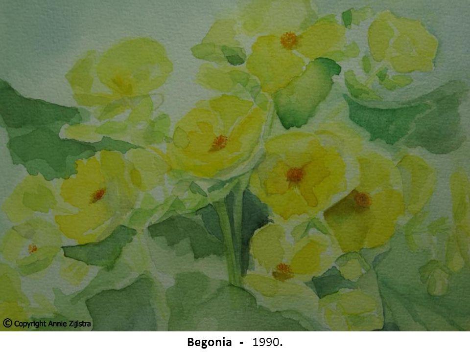 Begonia - 1990.