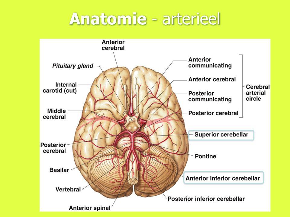 Anatomie - arterieel
