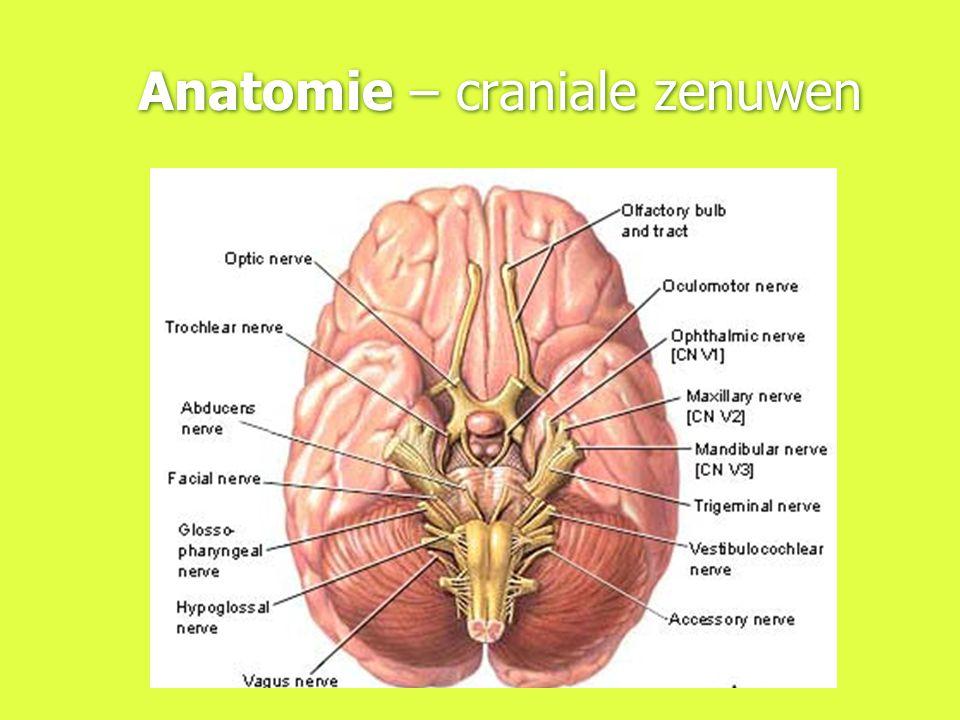 Anatomie – craniale zenuwen