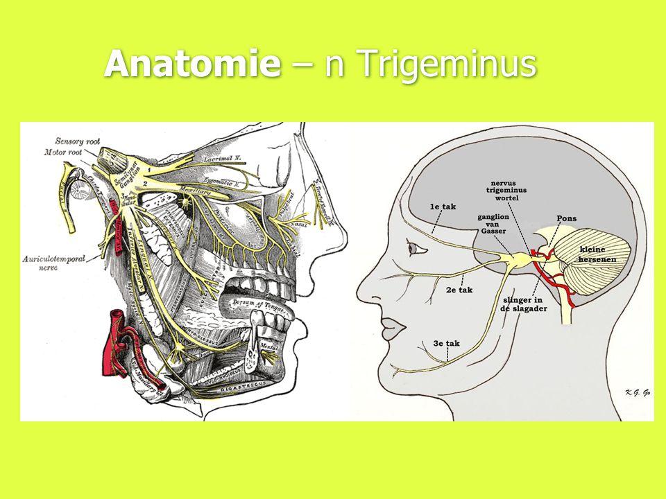 Anatomie – n Trigeminus