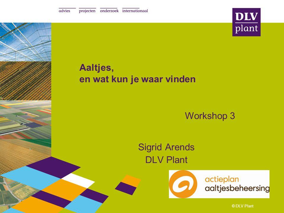 © DLV Plant Aaltjes, en wat kun je waar vinden Sigrid Arends DLV Plant Workshop 3