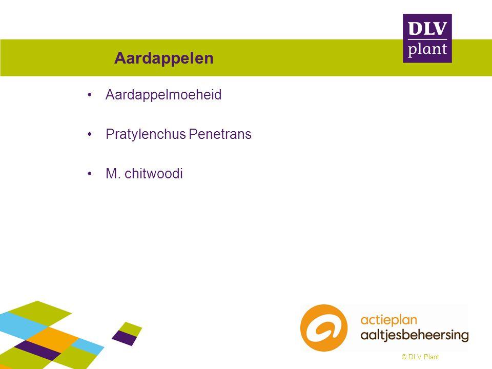 © DLV Plant Aardappelen Aardappelmoeheid Pratylenchus Penetrans M. chitwoodi