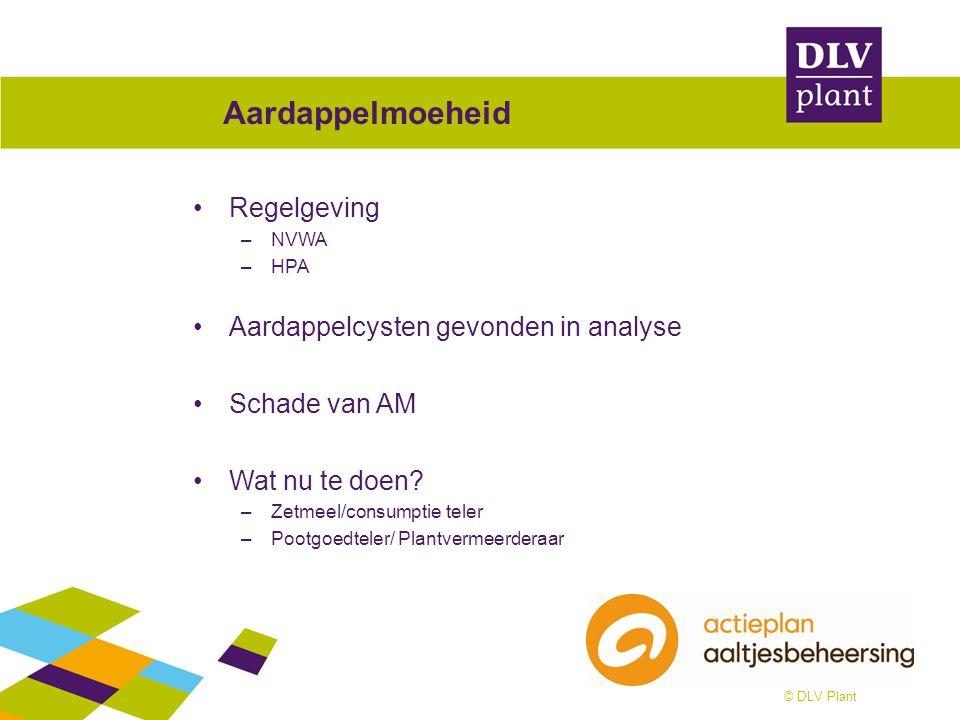 © DLV Plant Aardappelmoeheid Regelgeving –NVWA –HPA Aardappelcysten gevonden in analyse Schade van AM Wat nu te doen? –Zetmeel/consumptie teler –Pootg