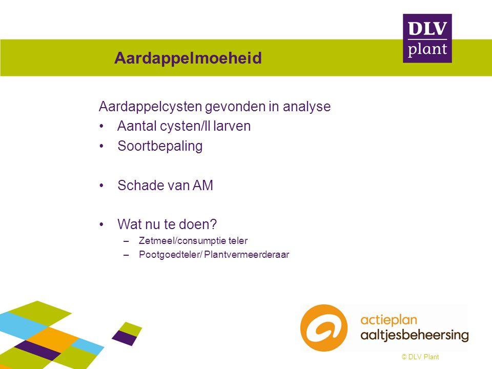 © DLV Plant Aardappelmoeheid Aardappelcysten gevonden in analyse Aantal cysten/ll larven Soortbepaling Schade van AM Wat nu te doen? –Zetmeel/consumpt