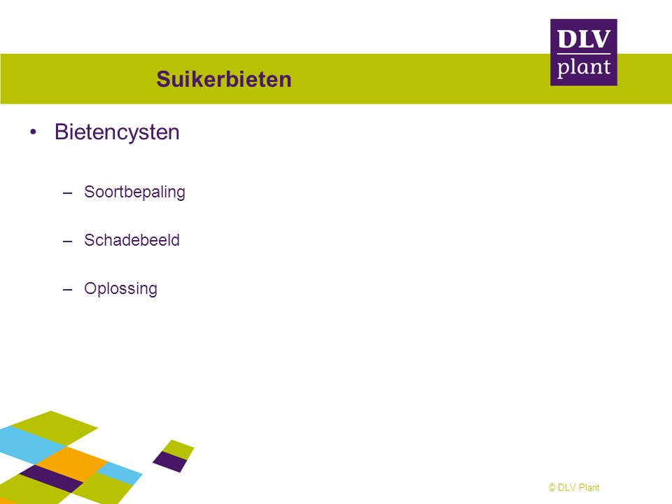 © DLV Plant Suikerbieten Bietencysten –Soortbepaling –Schadebeeld –Oplossing