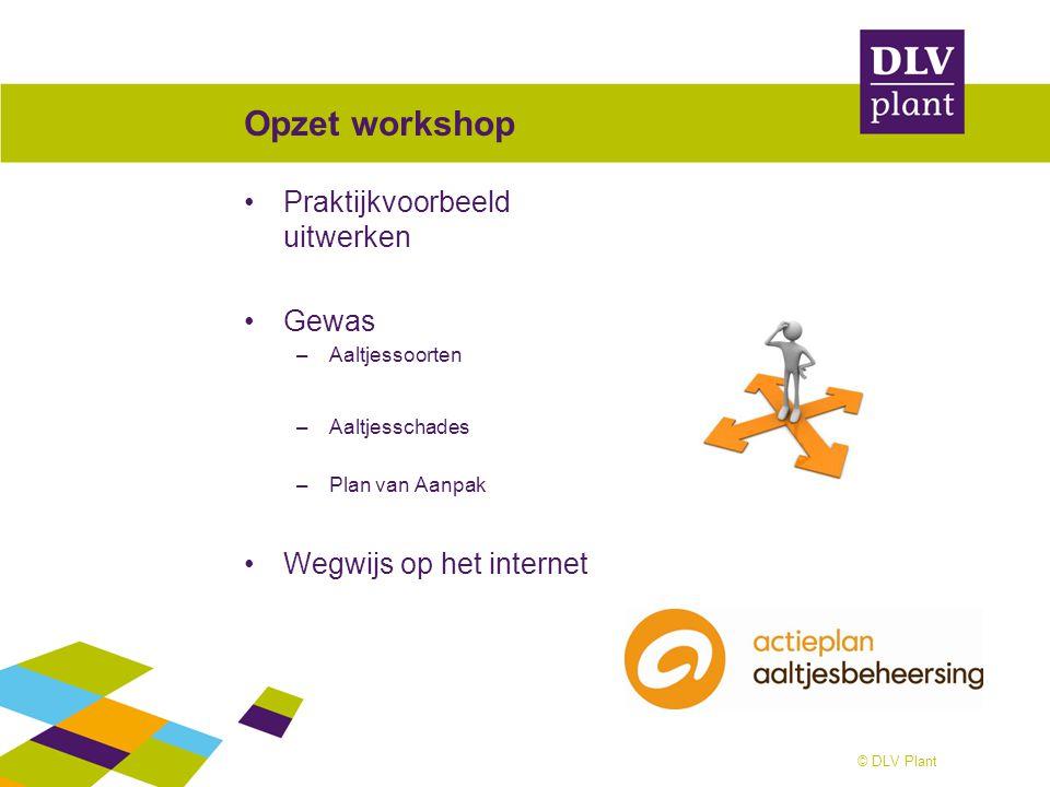 © DLV Plant Opzet workshop Praktijkvoorbeeld uitwerken Gewas –Aaltjessoorten –Aaltjesschades –Plan van Aanpak Wegwijs op het internet