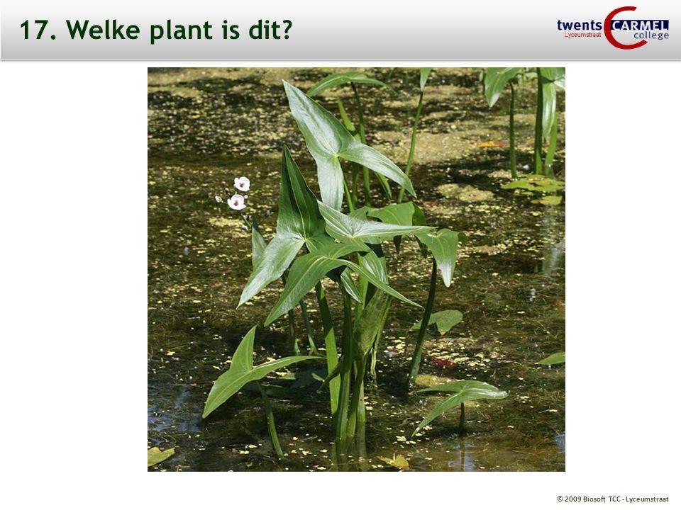 © 2009 Biosoft TCC - Lyceumstraat 17. Welke plant is dit?