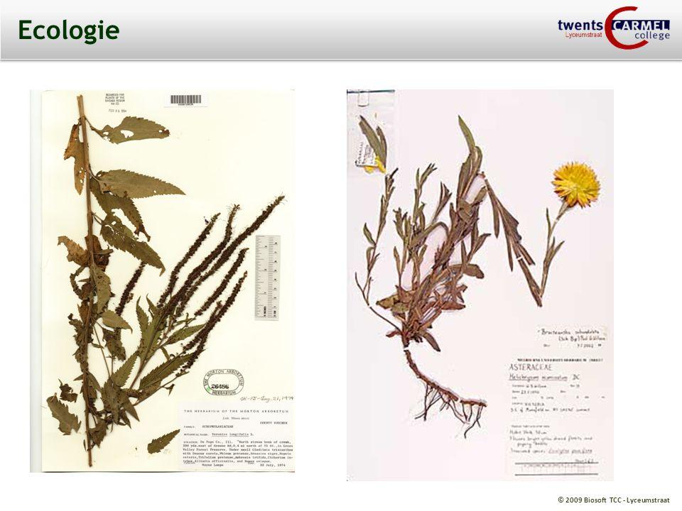 © 2009 Biosoft TCC - Lyceumstraat Ecologie