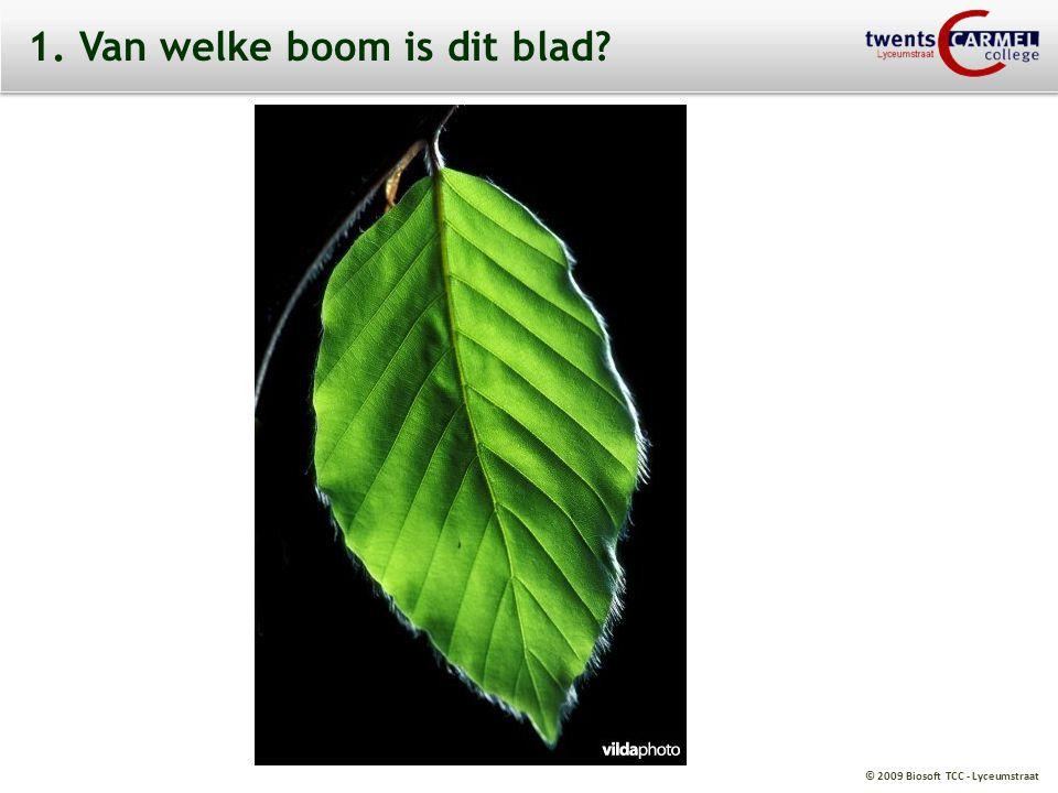 © 2009 Biosoft TCC - Lyceumstraat 2. Van welke boom is dit blad?