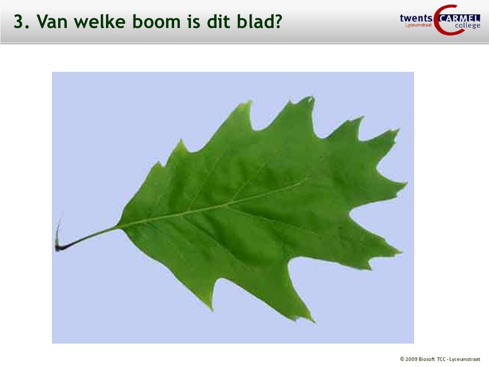 © 2009 Biosoft TCC - Lyceumstraat 3. Van welke boom is dit blad?
