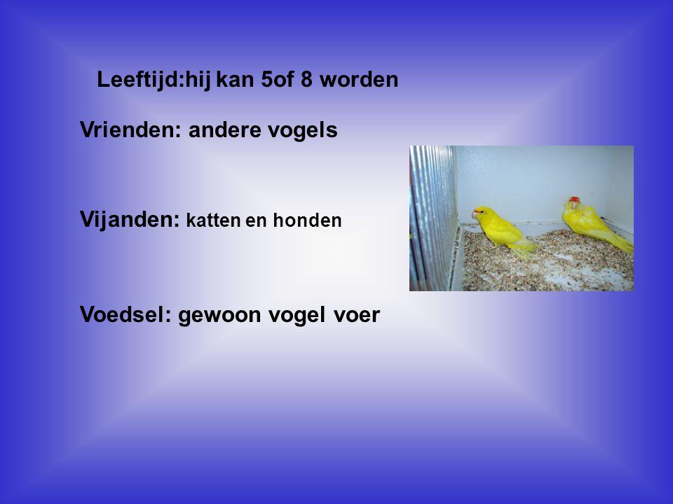 Leeftijd:hij kan 5of 8 worden Vul hier de antwoorden van vraag 6,7,8,9 in Vrienden: andere vogels Vijanden: katten en honden Voedsel: gewoon vogel voer