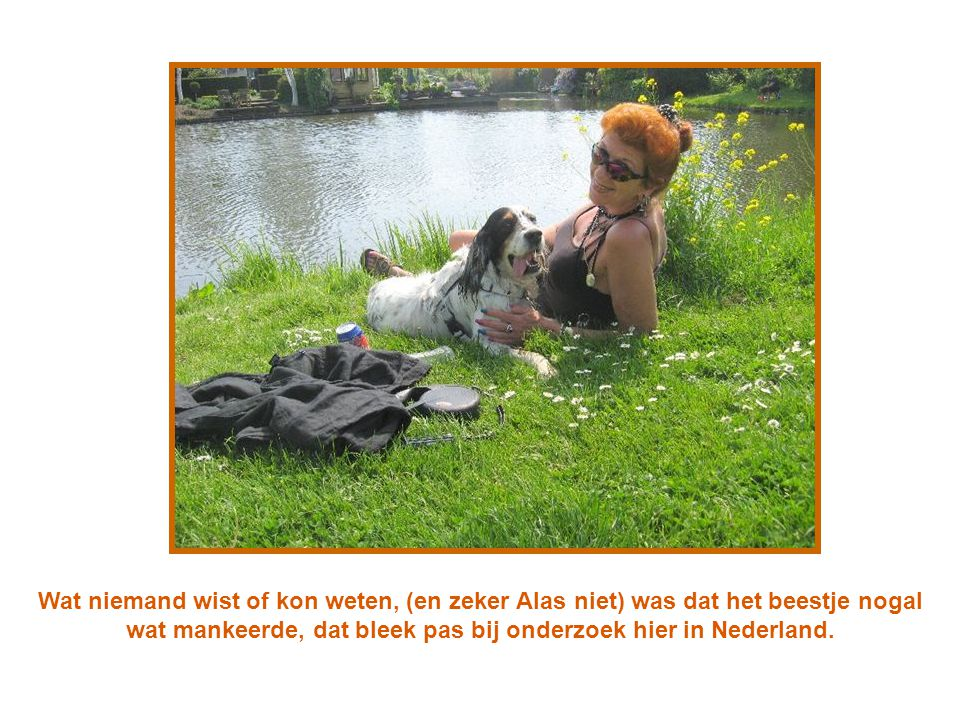 Wat niemand wist of kon weten, (en zeker Alas niet) was dat het beestje nogal wat mankeerde, dat bleek pas bij onderzoek hier in Nederland.