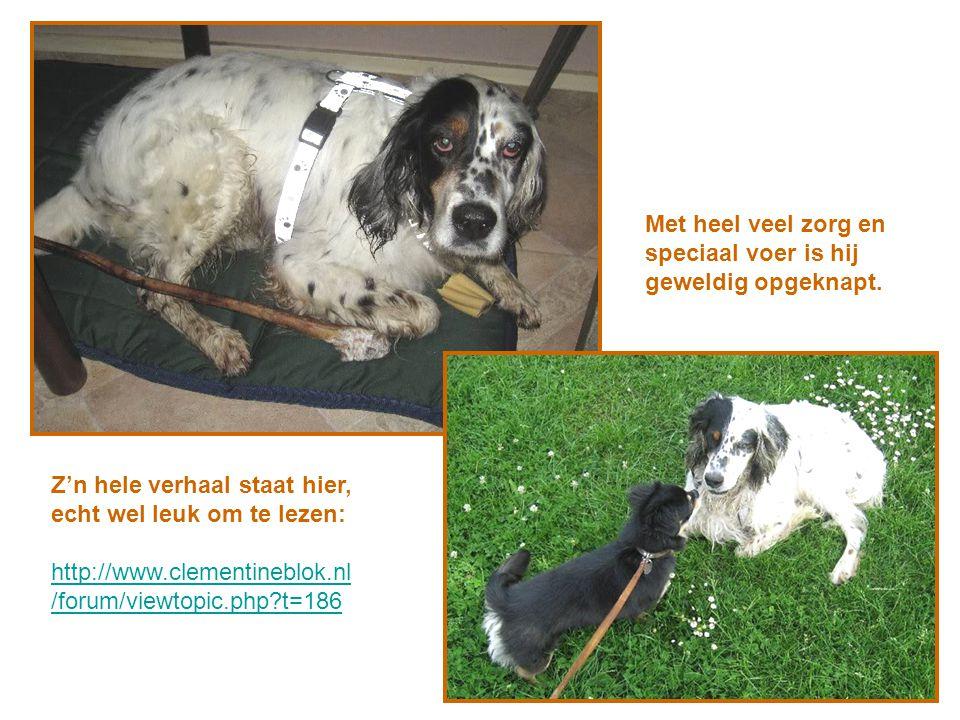 Z'n hele verhaal staat hier, echt wel leuk om te lezen: http://www.clementineblok.nl /forum/viewtopic.php?t=186 Met heel veel zorg en speciaal voer is hij geweldig opgeknapt.