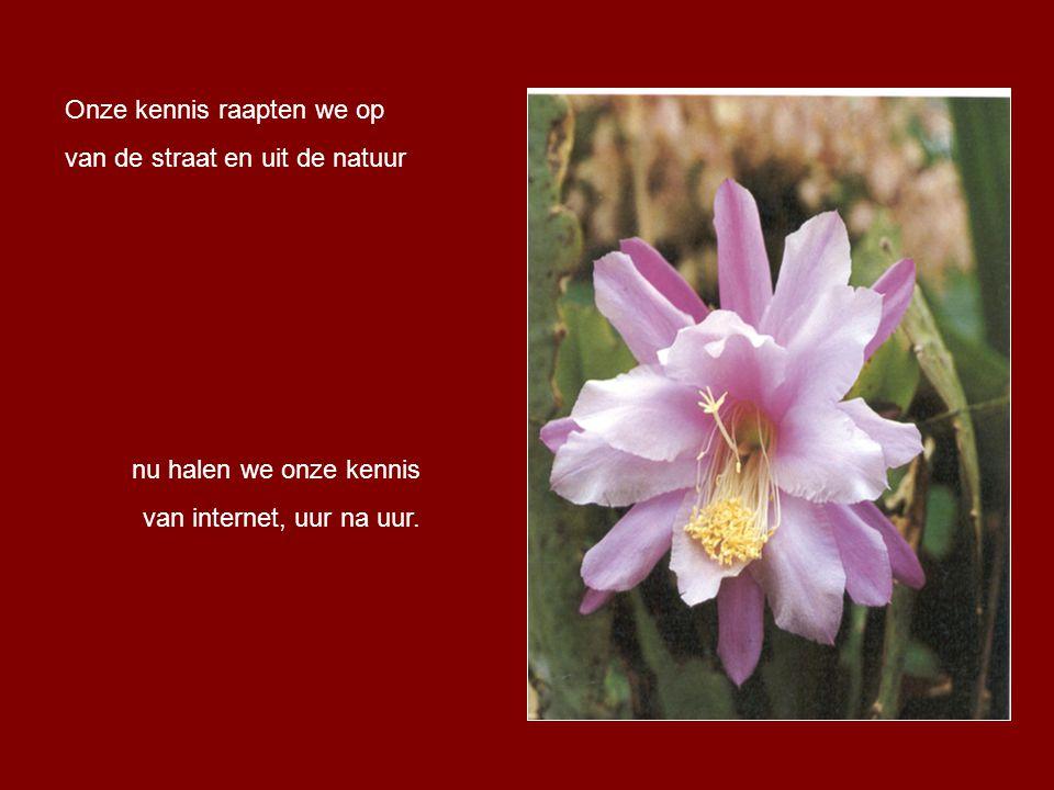 We konden van sleutel- en korenbloemen een boeketje binden, nu zijn het beschermde bloemen, enkel nog in boeken te vinden.