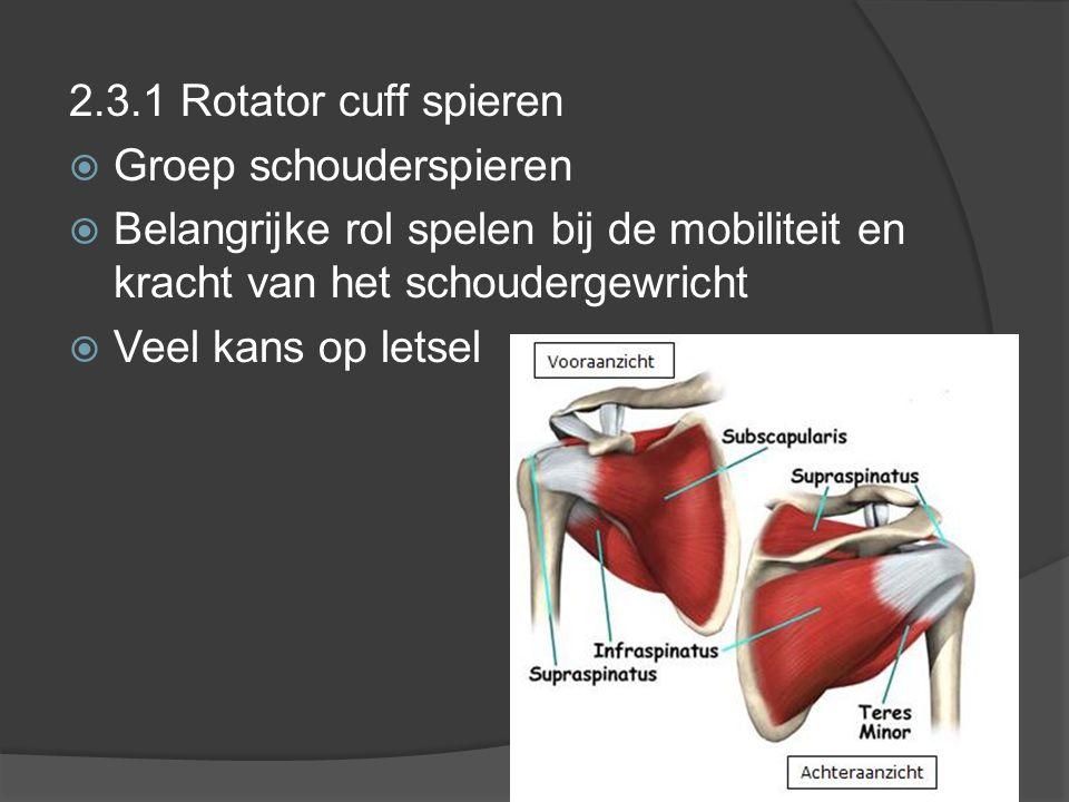 2.3.1 Rotator cuff spieren  Groep schouderspieren  Belangrijke rol spelen bij de mobiliteit en kracht van het schoudergewricht  Veel kans op letsel