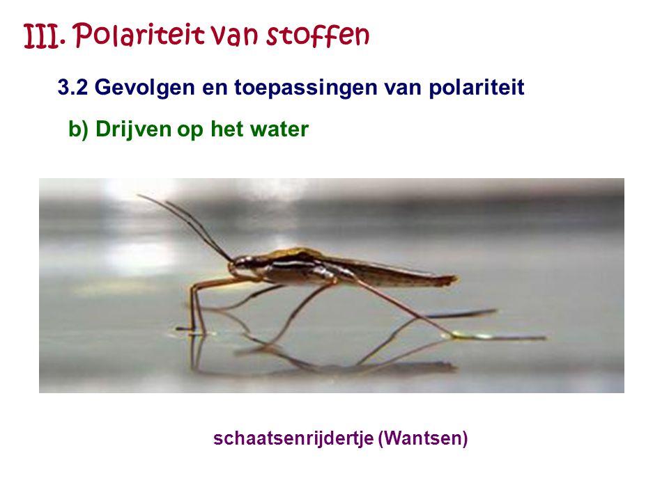 III. Polariteit van stoffen 3.2 Gevolgen en toepassingen van polariteit b) Drijven op het water schaatsenrijdertje (Wantsen)