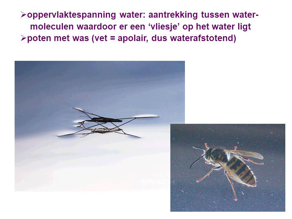  oppervlaktespanning water: aantrekking tussen water- moleculen waardoor er een 'vliesje' op het water ligt  poten met was (vet = apolair, dus water