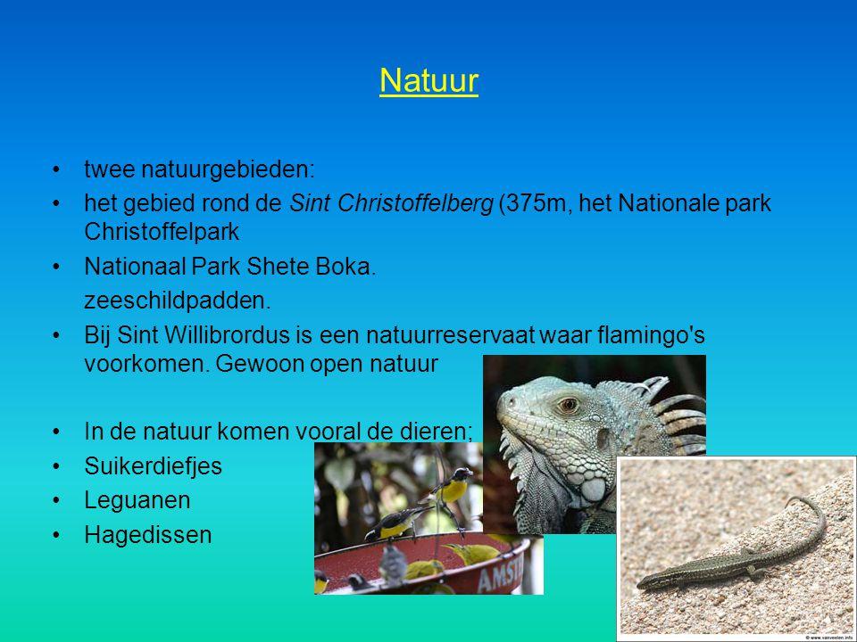 Natuur twee natuurgebieden: het gebied rond de Sint Christoffelberg (375m, het Nationale park Christoffelpark Nationaal Park Shete Boka. zeeschildpadd