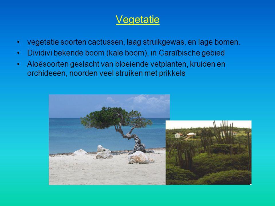 Vegetatie vegetatie soorten cactussen, laag struikgewas, en lage bomen. Dividivi bekende boom (kale boom), in Caraïbische gebied Aloësoorten geslacht