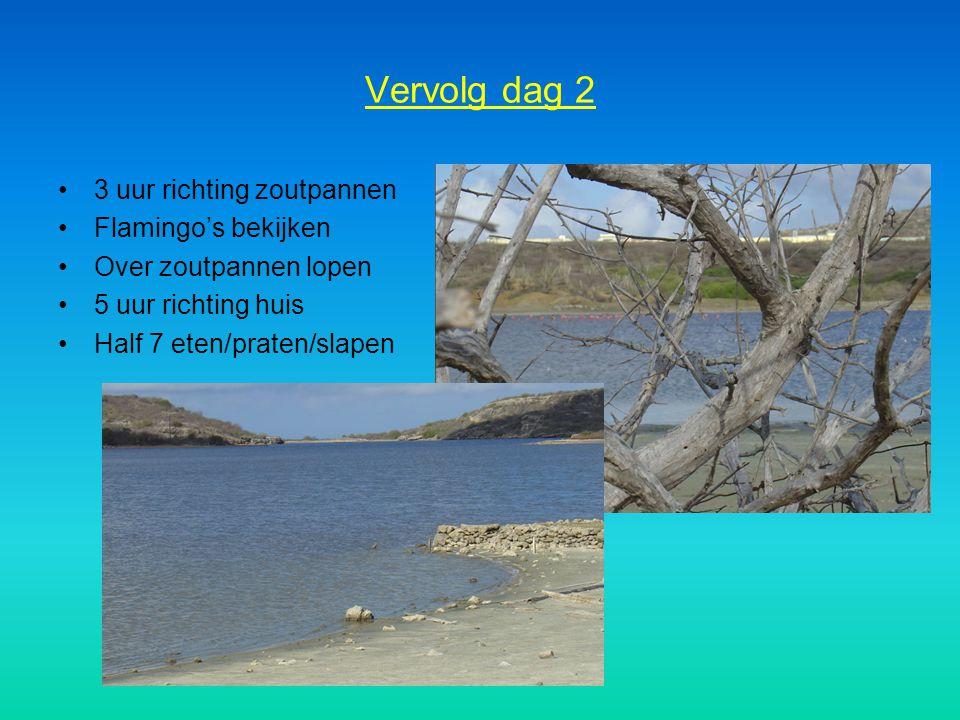Vervolg dag 2 3 uur richting zoutpannen Flamingo's bekijken Over zoutpannen lopen 5 uur richting huis Half 7 eten/praten/slapen