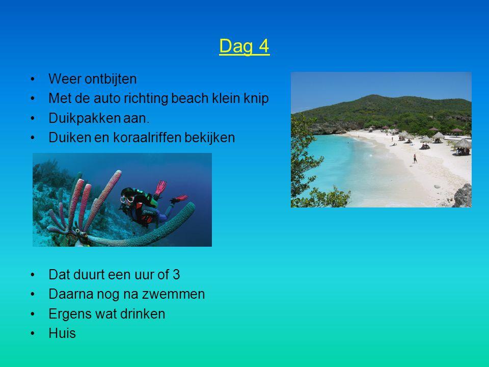 Dag 4 Weer ontbijten Met de auto richting beach klein knip Duikpakken aan. Duiken en koraalriffen bekijken Dat duurt een uur of 3 Daarna nog na zwemme