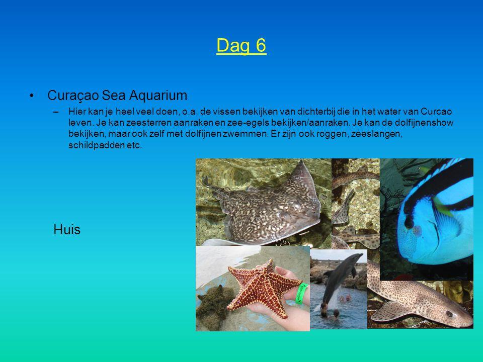Dag 6 Curaçao Sea Aquarium –Hier kan je heel veel doen, o.a. de vissen bekijken van dichterbij die in het water van Curcao leven. Je kan zeesterren aa