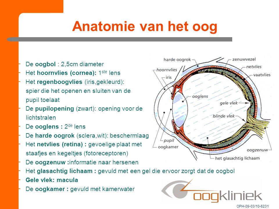 Anatomie van het oog −De oogbol : 2,5cm diameter −Het hoornvlies (cornea): 1 ste lens −Het regenboogvlies (iris,gekleurd): spier die het openen en sluiten van de pupil toelaat −De pupilopening (zwart): opening voor de lichtstralen −De ooglens : 2 de lens −De harde oogrok (sclera,wit): beschermlaag −Het netvlies (retina) : gevoelige plaat met staafjes en kegeltjes (fotoreceptoren) −De oogzenuw :informatie naar hersenen −Het glasachtig lichaam : gevuld met een gel die ervoor zorgt dat de oogbol −Gele vlek: macula −De oogkamer : gevuld met kamerwater OPH-09-03/10-6231