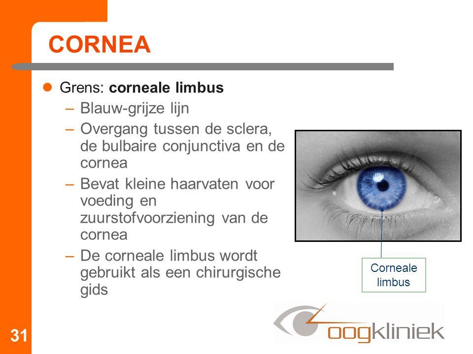 CORNEA Grens: corneale limbus –Blauw-grijze lijn –Overgang tussen de sclera, de bulbaire conjunctiva en de cornea –Bevat kleine haarvaten voor voeding en zuurstofvoorziening van de cornea –De corneale limbus wordt gebruikt als een chirurgische gids 31 Corneale limbus