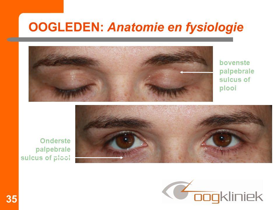 OOGLEDEN: Anatomie en fysiologie 35 bovenste palpebrale sulcus of plooi Onderste palpebrale sulcus of plooi