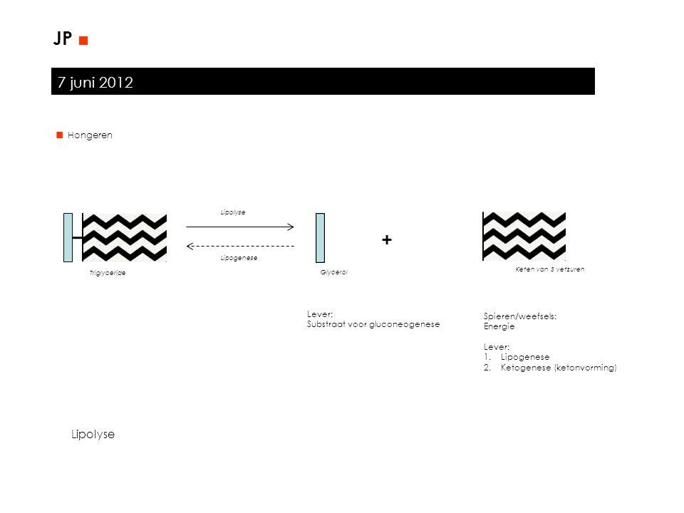7 juni 2012 JP ■ Lever: Substraat voor gluconeogenese Spieren/weefsels: Energie Lever: 1.Lipogenese 2.Ketogenese (ketonvorming) + Triglyceride Glycero