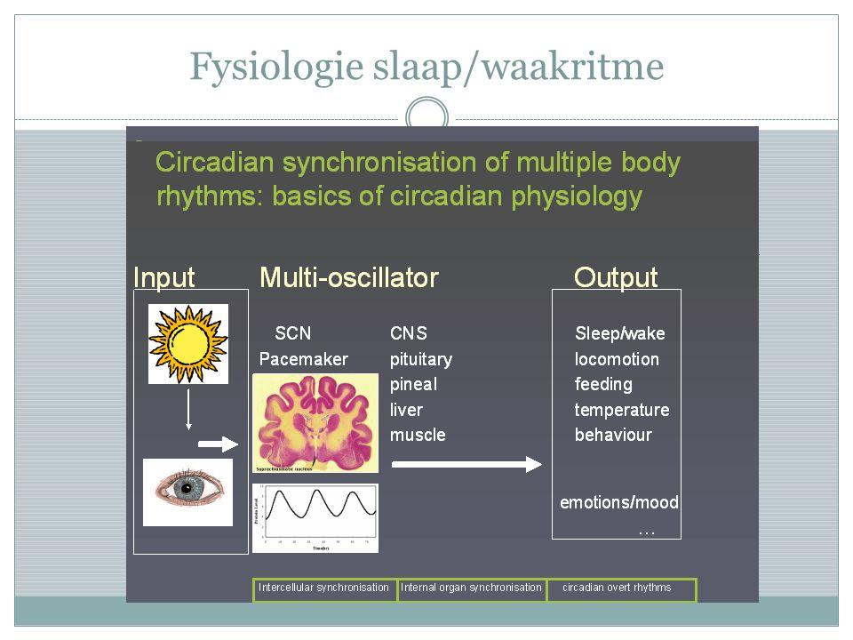 Fysiologie in slaap/waakritme