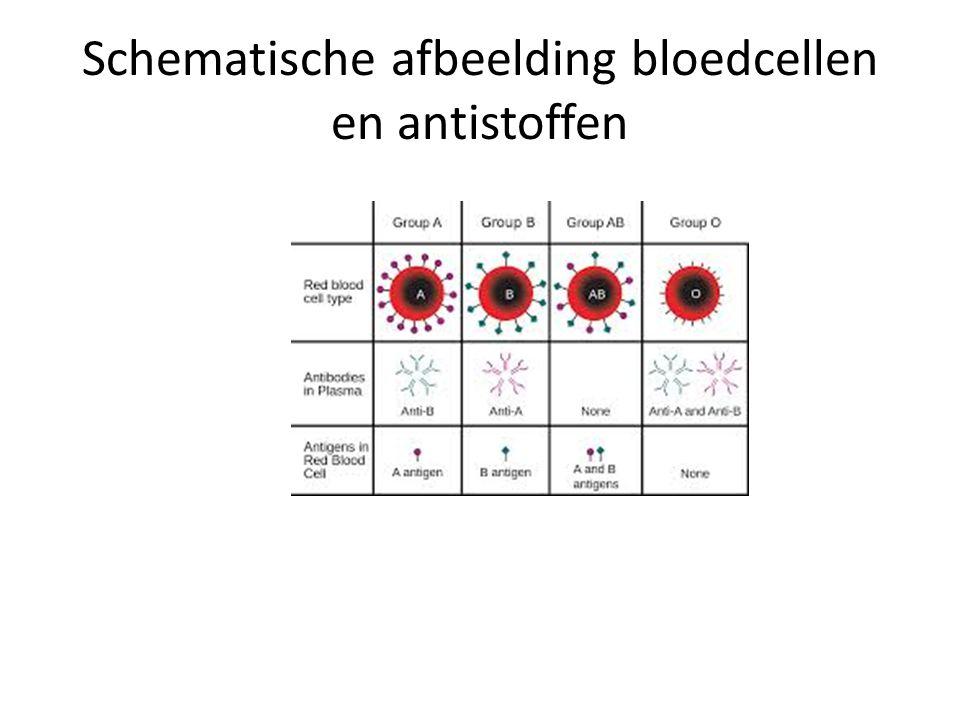 Schematische afbeelding bloedcellen en antistoffen