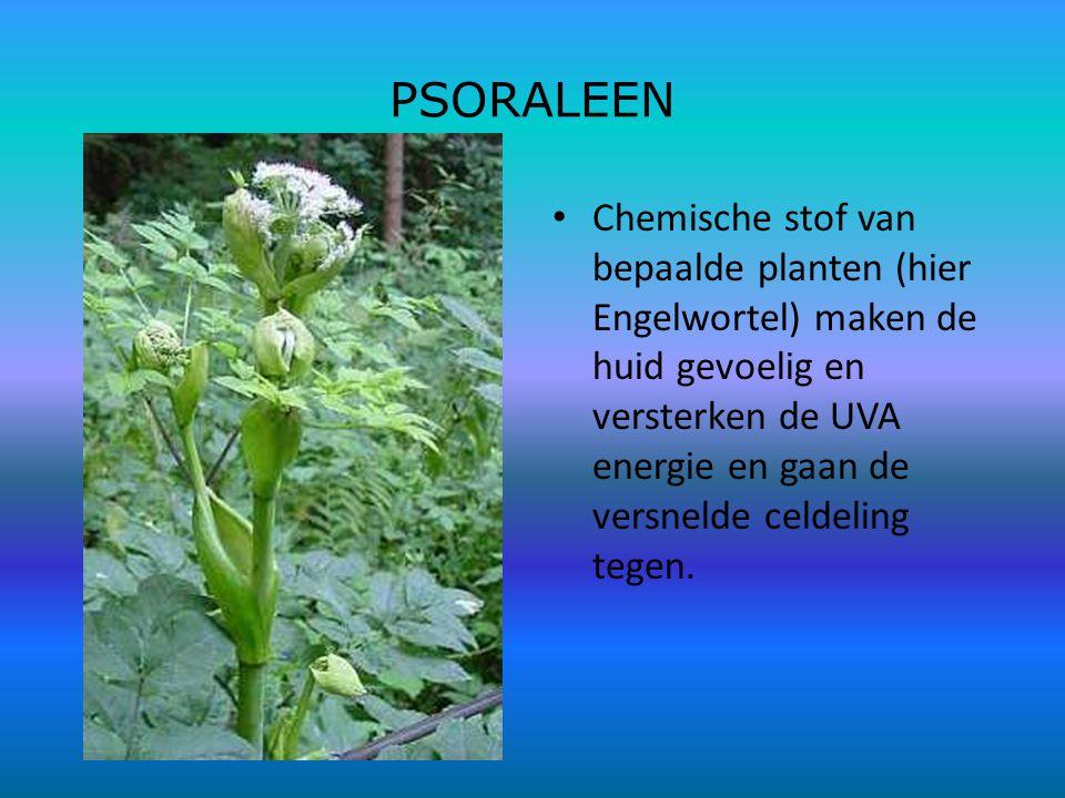 PSORALEEN Chemische stof van bepaalde planten (hier Engelwortel) maken de huid gevoelig en versterken de UVA energie en gaan de versnelde celdeling tegen.
