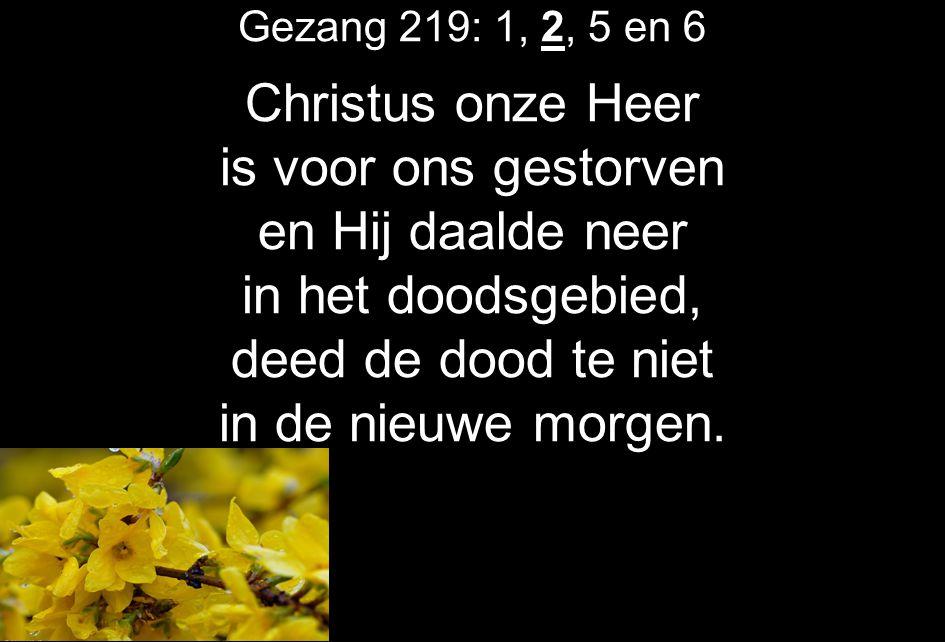 Gezang 219: 1, 2, 5 en 6 Christus onze Heer is voor ons gestorven en Hij daalde neer in het doodsgebied, deed de dood te niet in de nieuwe morgen.