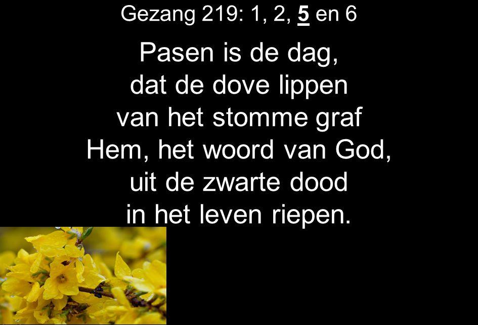 Gezang 219: 1, 2, 5 en 6 Pasen is de dag, dat de dove lippen van het stomme graf Hem, het woord van God, uit de zwarte dood in het leven riepen.