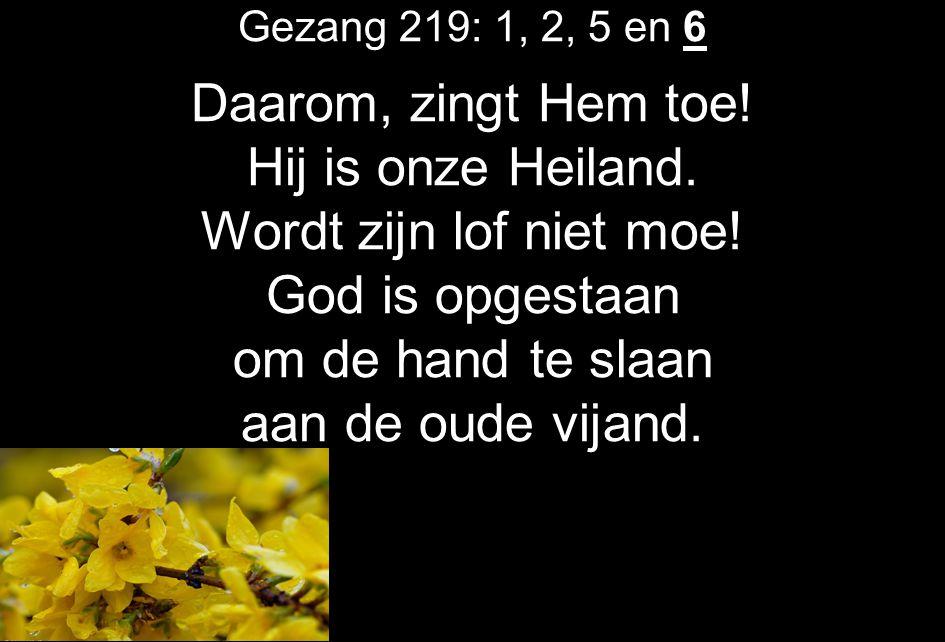 Gezang 219: 1, 2, 5 en 6 Daarom, zingt Hem toe! Hij is onze Heiland. Wordt zijn lof niet moe! God is opgestaan om de hand te slaan aan de oude vijand.