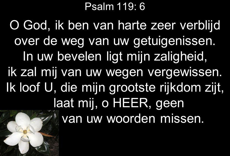 Psalm 119: 6 O God, ik ben van harte zeer verblijd over de weg van uw getuigenissen. In uw bevelen ligt mijn zaligheid, ik zal mij van uw wegen vergew