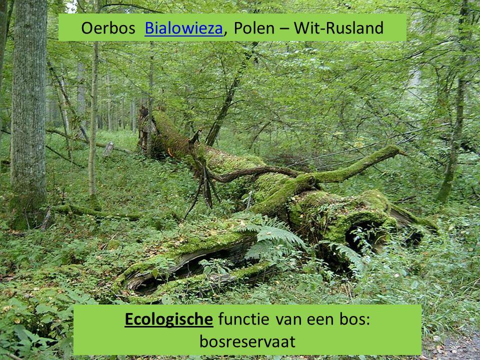 Oerbos Bialowieza, Polen – Wit-RuslandBialowieza Ecologische functie van een bos: bosreservaat