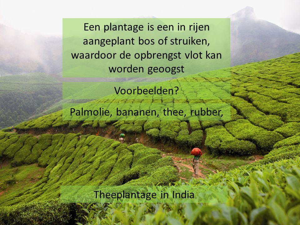 Theeplantage in India Een plantage is een in rijen aangeplant bos of struiken, waardoor de opbrengst vlot kan worden geoogst Voorbeelden? Palmolie, ba