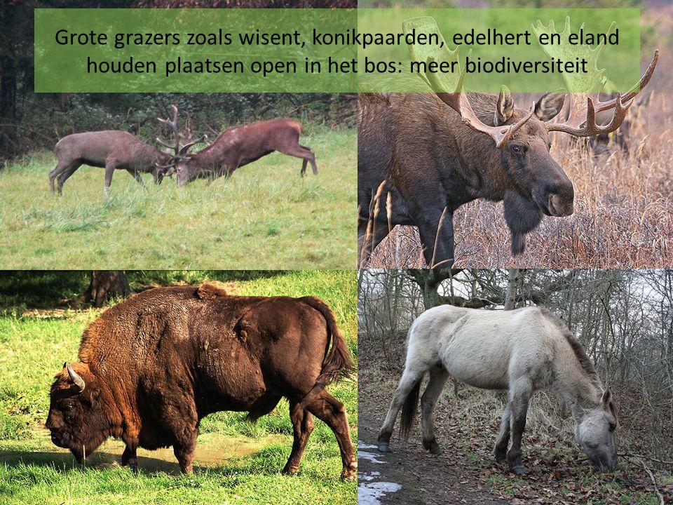 Vallei van de Kikbeek Verschillende waardevolle landschappen vormen samen een landschapspark of een nationaal park Midden-Limburg en Hoge Kempen