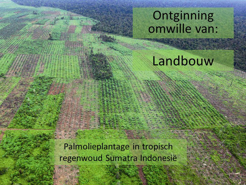Palmolieplantage in tropisch regenwoud Sumatra Indonesië Ontginning omwille van: Landbouw