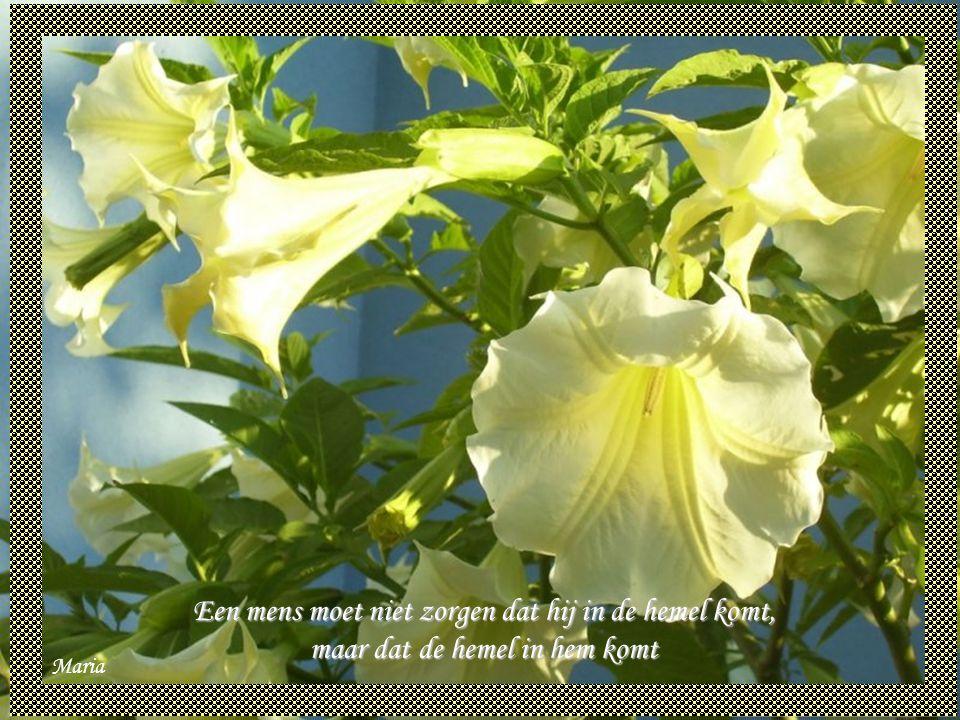 Maria Uiteindelijk zullen we ons de woorden, van onze vijanden niet herinneren, maar wel het zwijgen van onze vrienden.