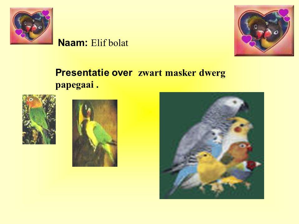 Naam: Elif bolat Presentatie over zwart masker dwerg papegaai.