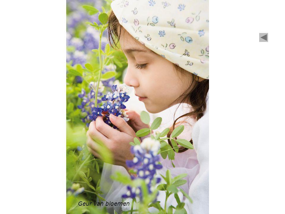 Geur van bloemen